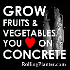 Grow fruits and vegetables you love on concrete, RollingPlanter.com rolling planter